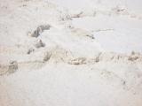 Badwater & Salt Desert 05