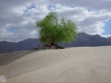 Mesquite Sand Dunes 10
