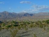 Mesquite Sand Dunes 03