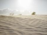 Mesquite Sand Dunes 07
