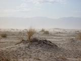 Mesquite Sand Dunes 08