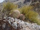 Titus Canyon 12