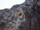 Titus Canyon 13