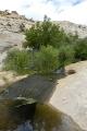 Calf Creek 18